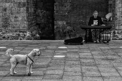 Encantador de perros / Hundeflüsterer