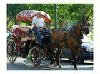 enchanted carriage, enchanted coachman, enchanted horse