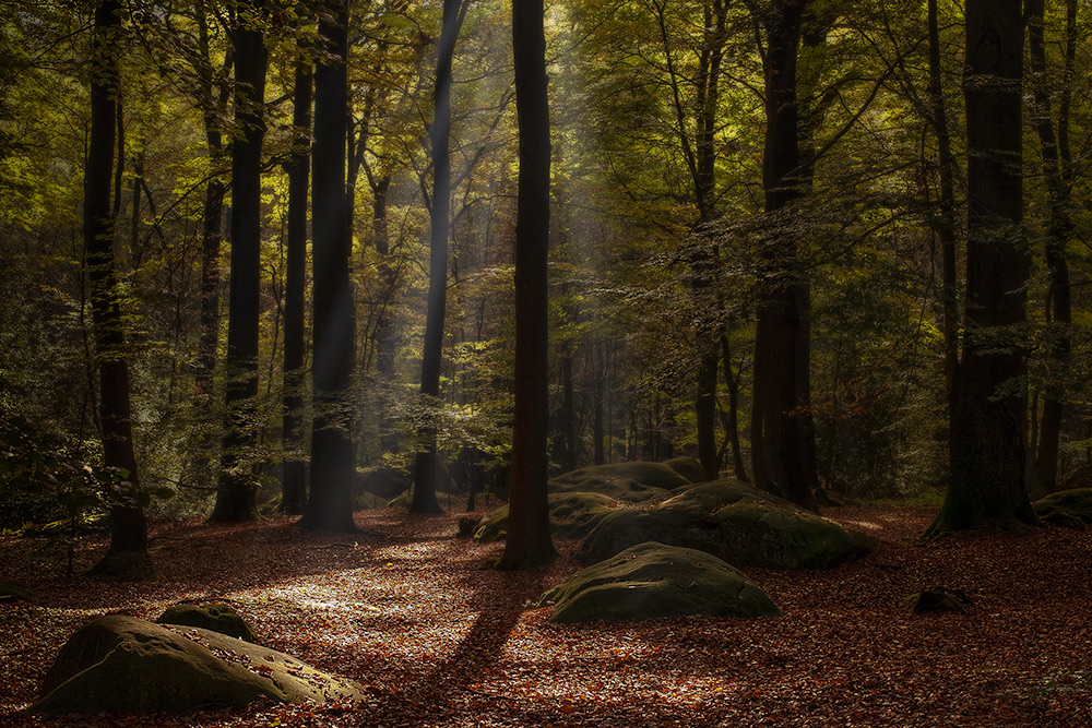 Enchanted forest IV