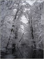 Enchanted Forest of Everfrost