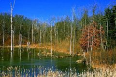 Enchanted Swamp