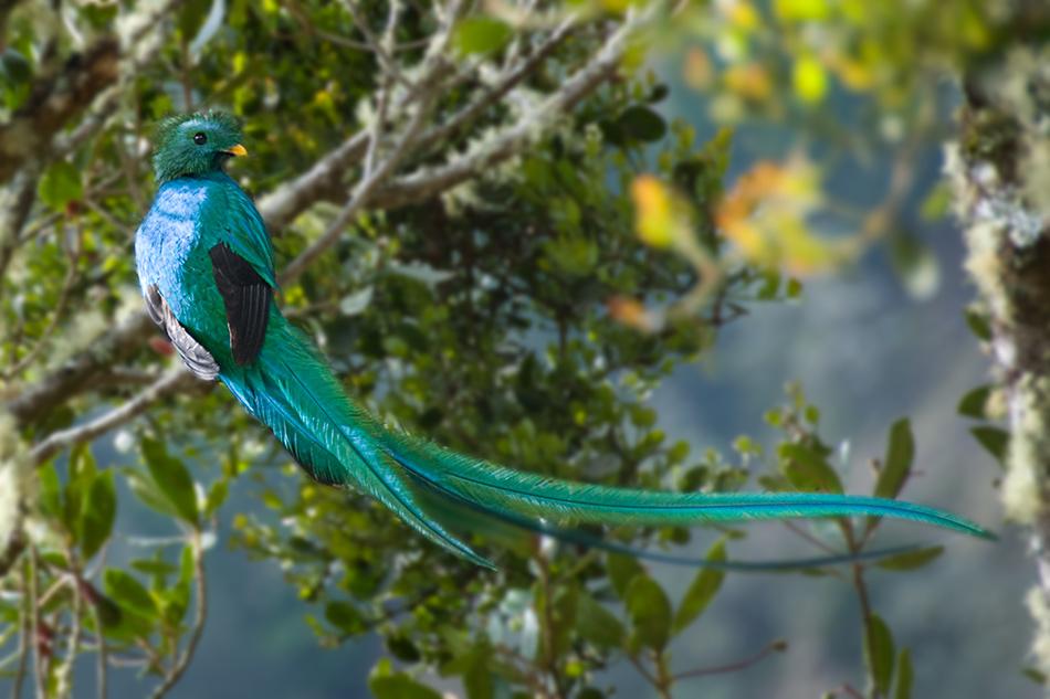 Encore un quetzal