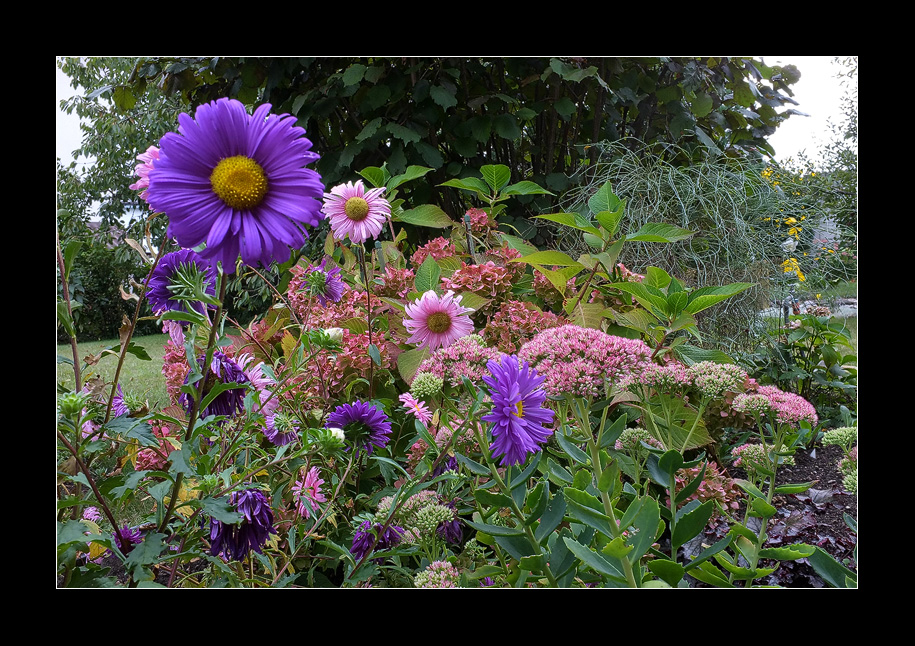 End of summer flowers