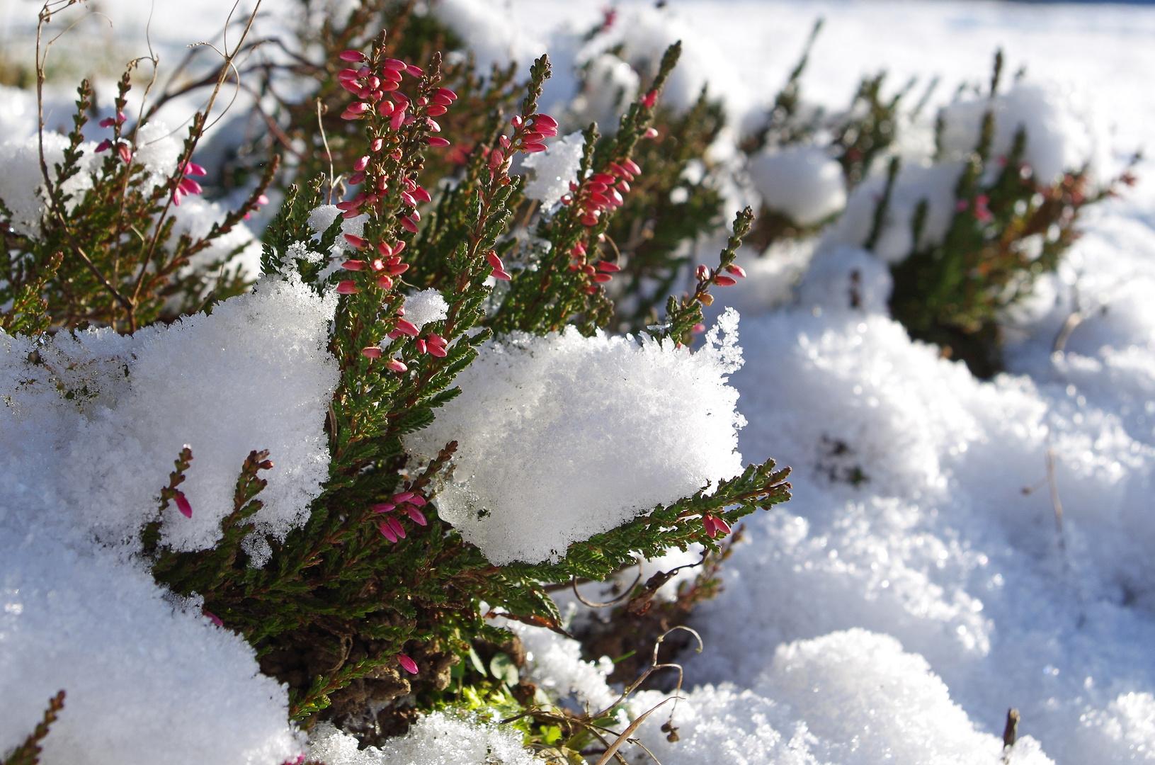 Ende des Winters in Sicht?