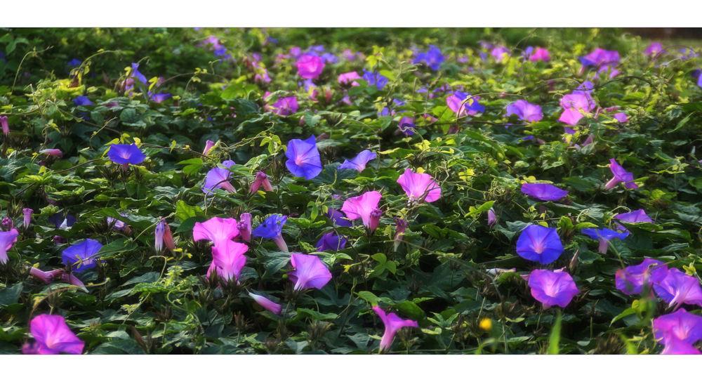 Ende Dezember, eine Wiese voller Blüten