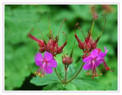 Ende schöner Blüten???