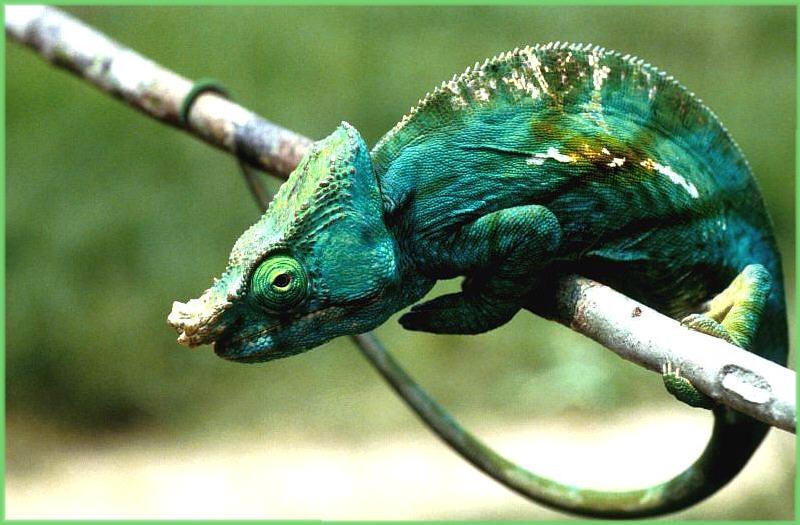 Endemisch in Madagaskar (2)