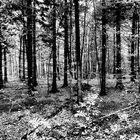 endeoktoberwald