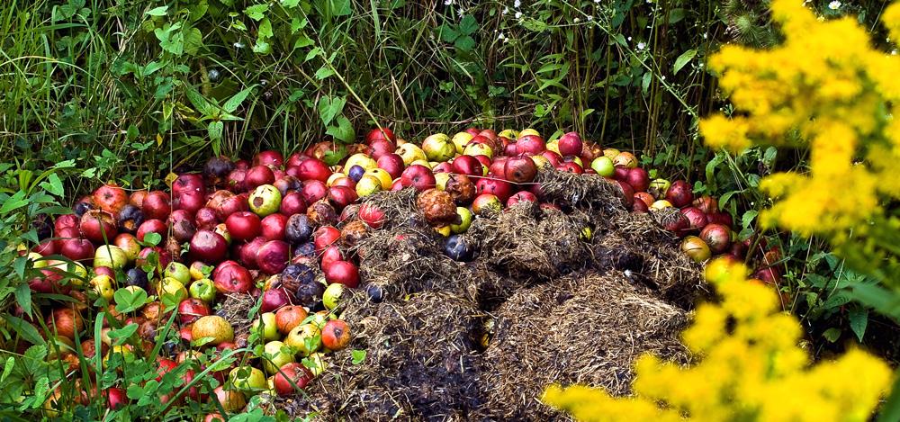 Endlagerung einer Apfelernte!
