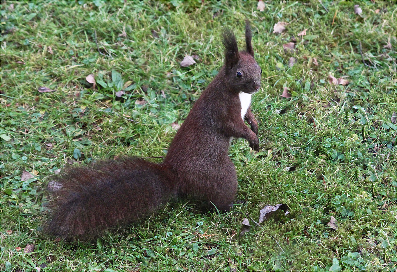 endlich Foto & Bild   eichhörnchen, natur, squirrel Bilder
