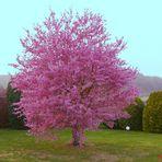 Endlich: Ein erster Frühlingsgruß......