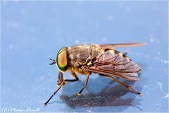 Endlich ein Insekt vor der Kamera