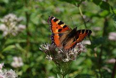 Endlich ein Schmetterling