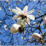 endlich Frühling (2)