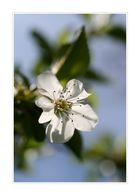 ....endlich Frühling (2)...