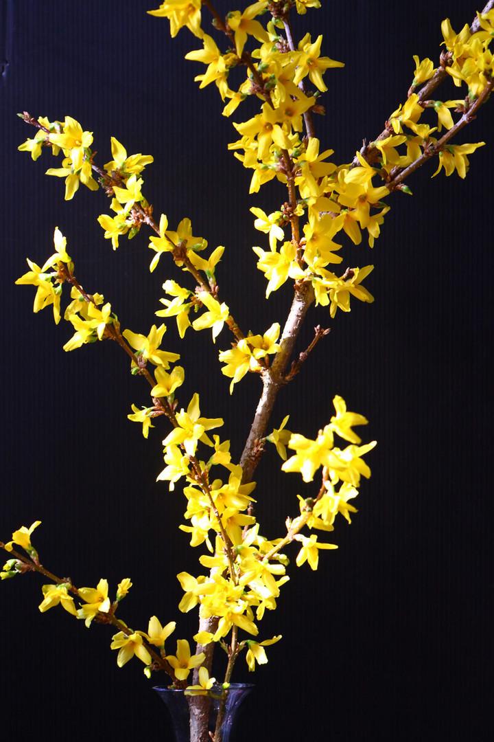 Endlich Frühling 2010 !!!