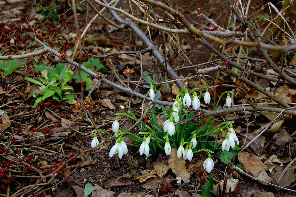 Endlich Frühling ???