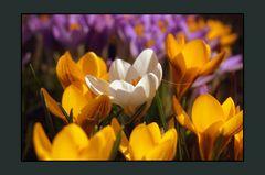 Endlich Frühling auf Hiddensee