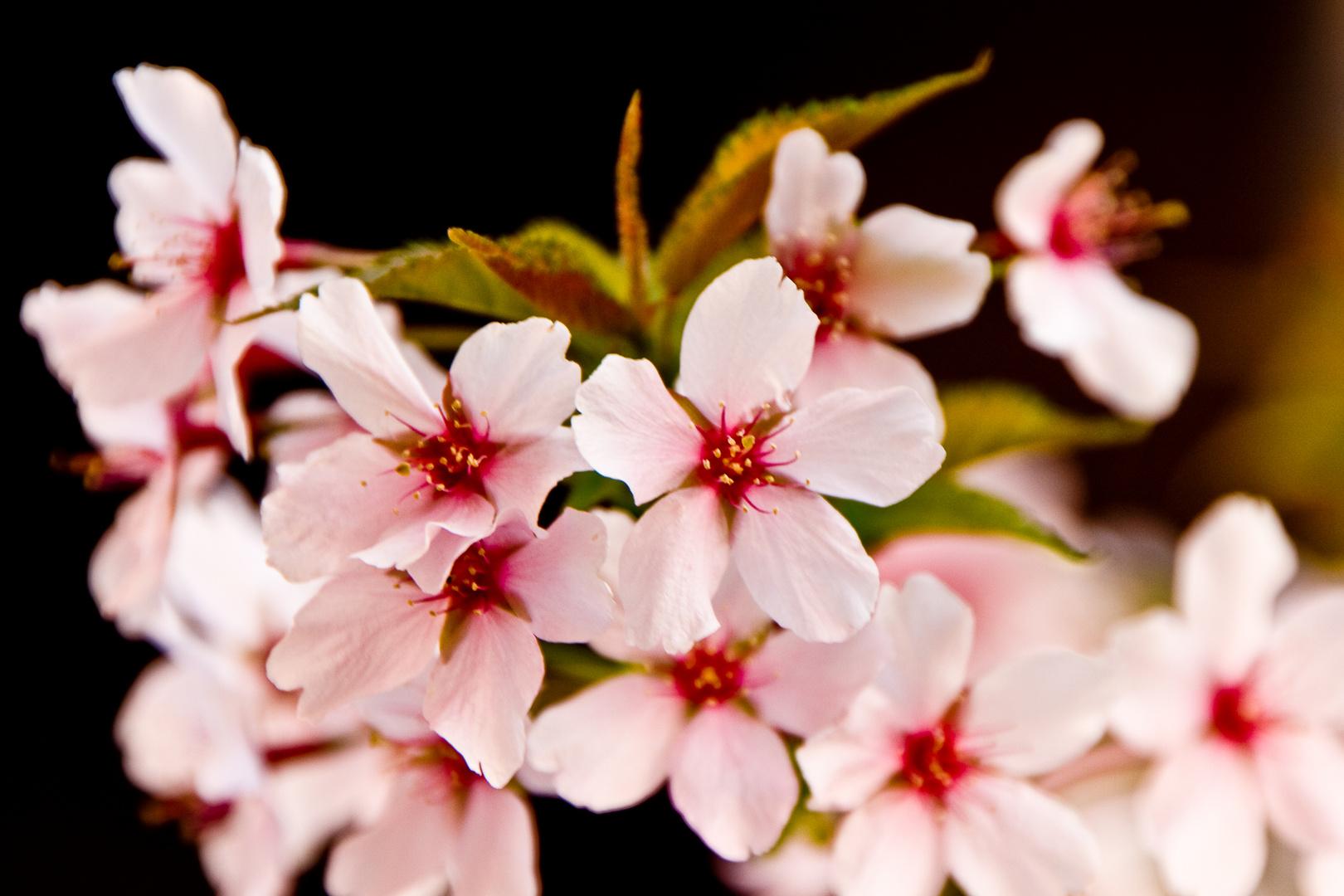 Endlich Frühling !