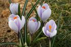 Endlich Frühling