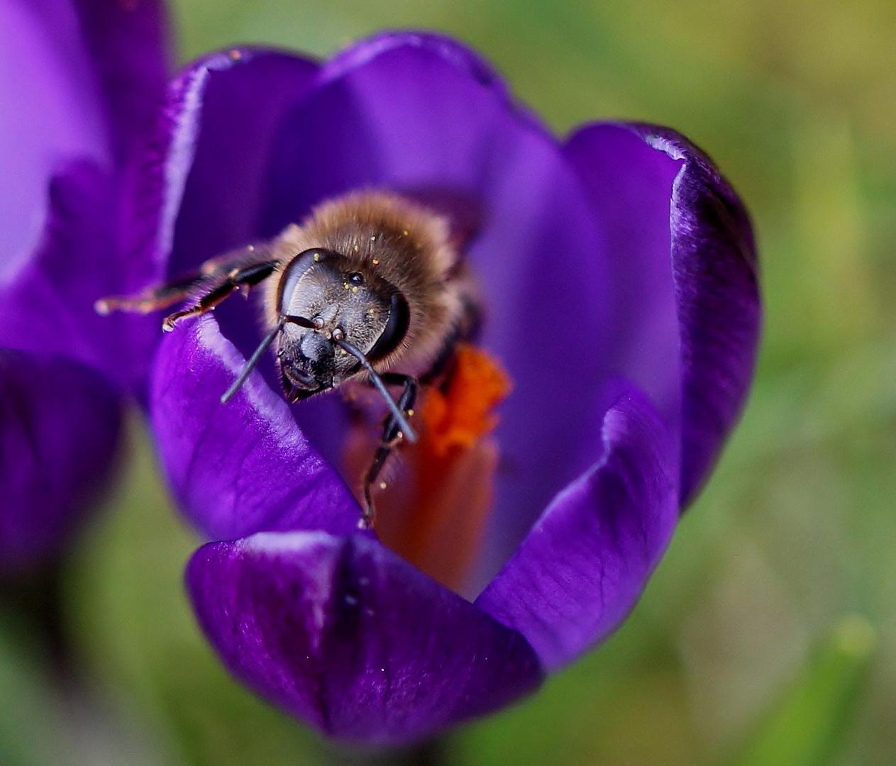 ...endlich Frühling