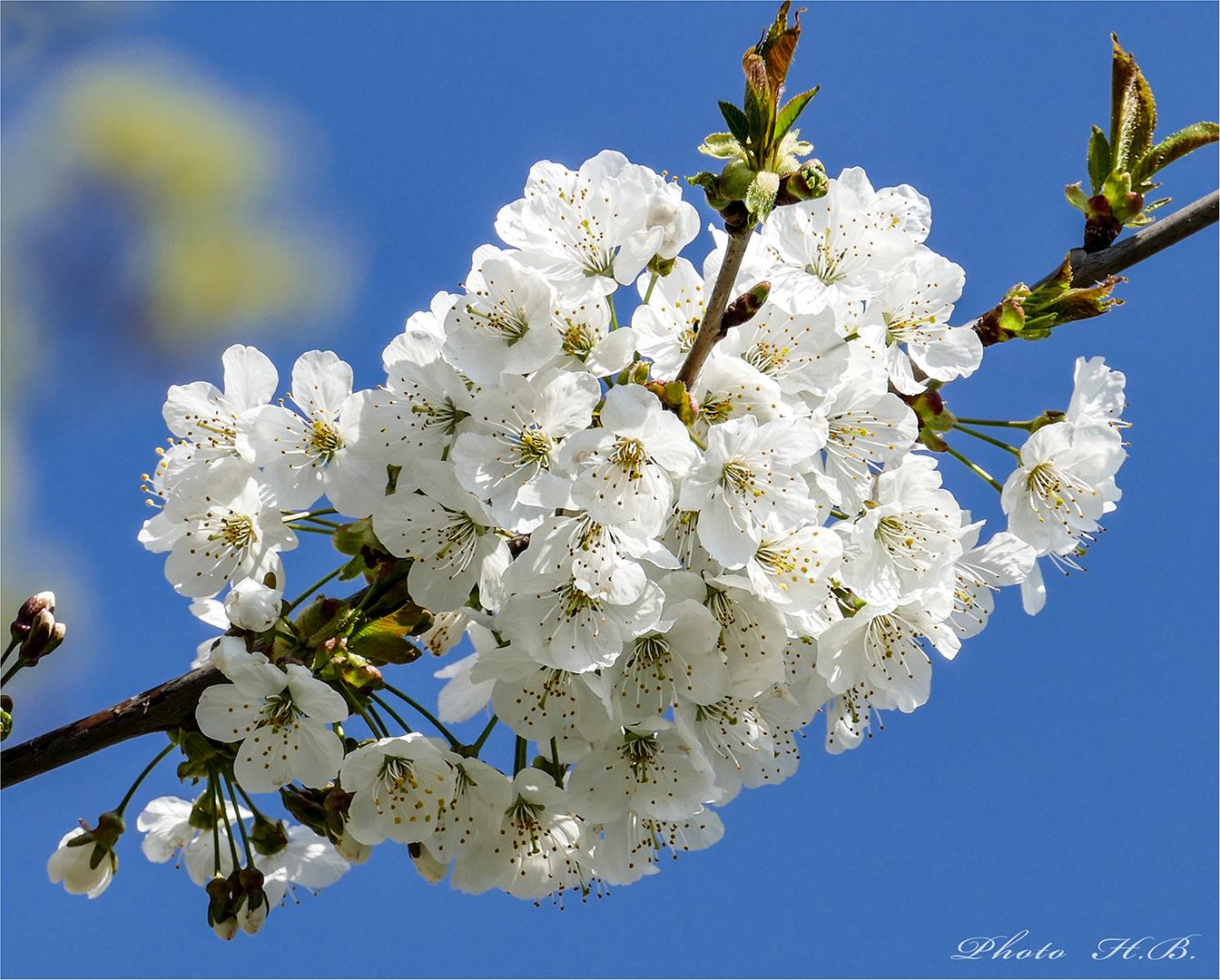ENDLICH FRÜHLING !! Foto & Bild | pflanzen, pilze & flechten ...