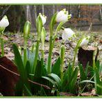endlich Frühling I