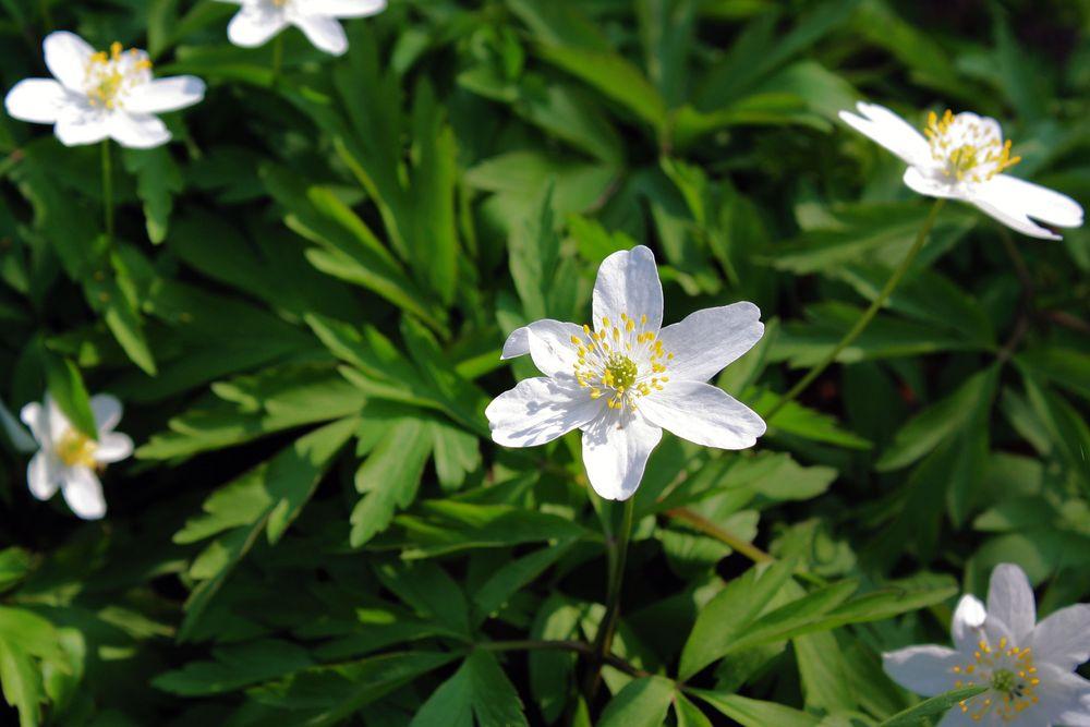 Endlich Frühling und alles blüht