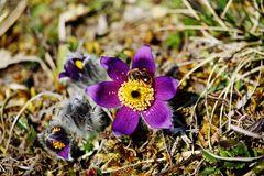 ENDLICH Frühling/1