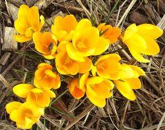 Endlich Frühling...und Summi ist auch schon auf den Flügeln
