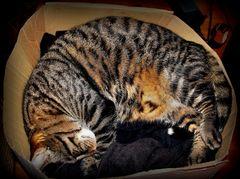 endlich geht es ihm besser und er kann wieder in seinem ausgeleierten Karton schlafen