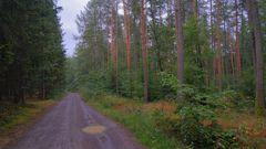 endlich gibt es wieder Pfützen im Wald (por fin vuelve a haber charcos en el bosque)