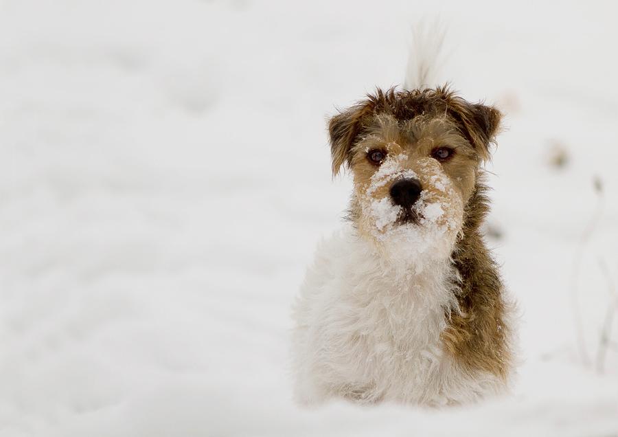 Endlich im Schnee stöbern ....