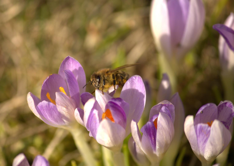 Endlich ist der Frühling da...