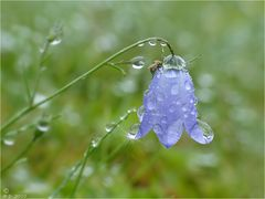 Endlich kam der lang ersehnte Regen ...