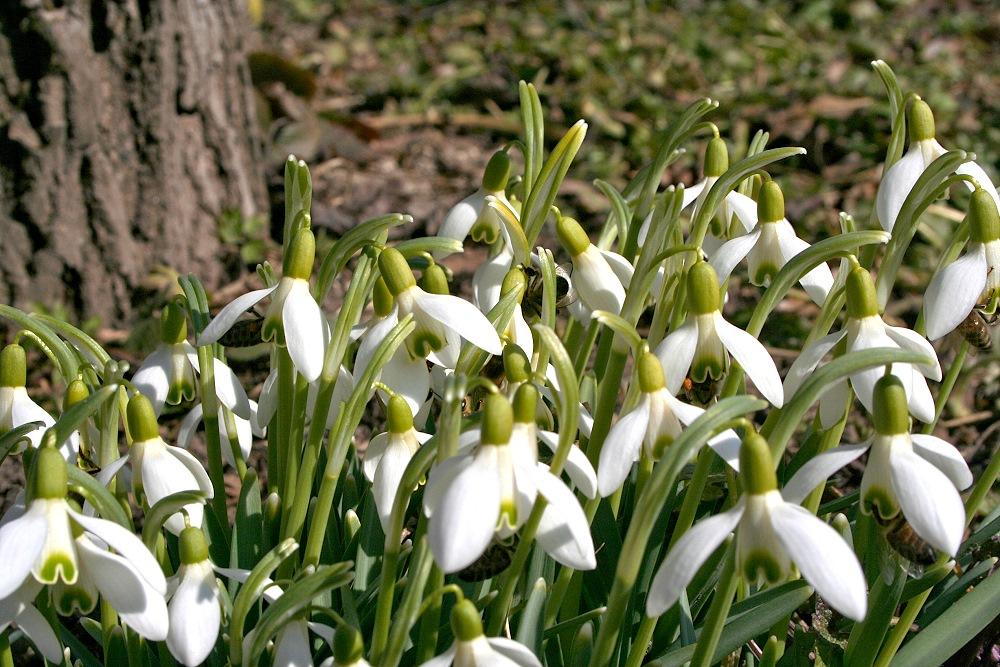 ... endlich kommt der Frühling :-)
