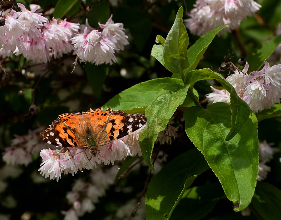 Endlich mal ein Schmetterling!