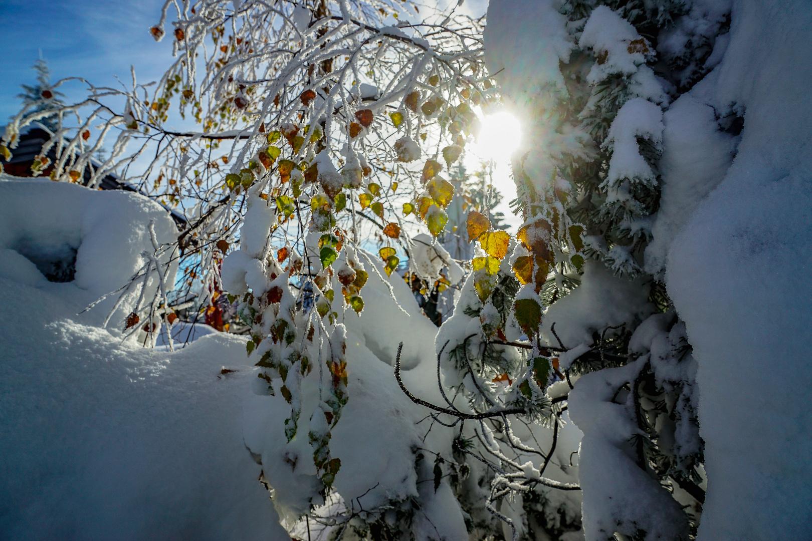 Endlich richtiger Winter ...dazu Sonne