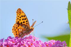 Endlich Schmetterlinge