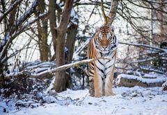Tiger.und.so.