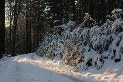 Endlich Schnee mit Sonne