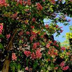 Endlich Wärme .....sitzen unter Kastanienbäumen in Blüte