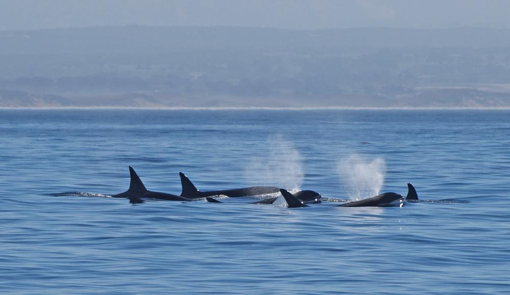 endlich: Wale