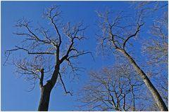 Endlich wieder blauer Himmel und Sonne
