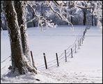 Endlich Winter #8