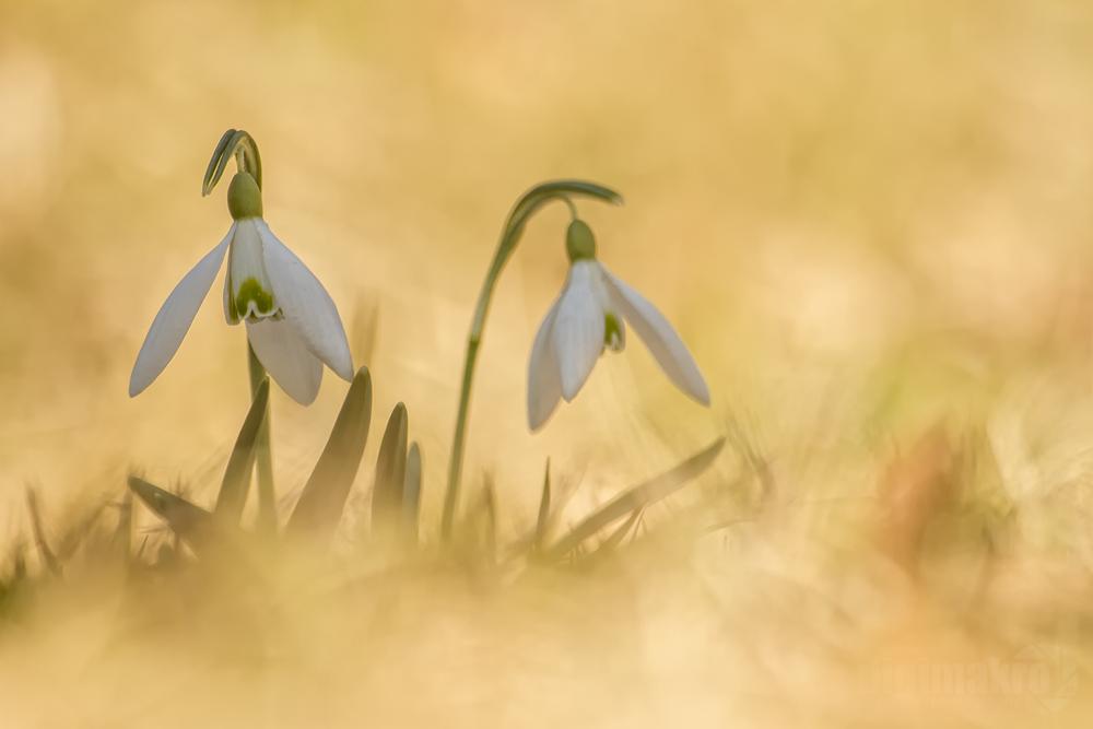 Endlich wird es Frühling!!!