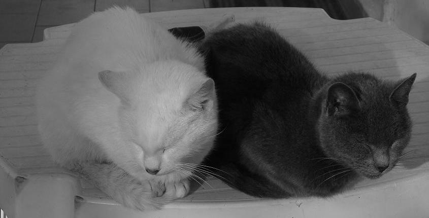 Enea&Dalila