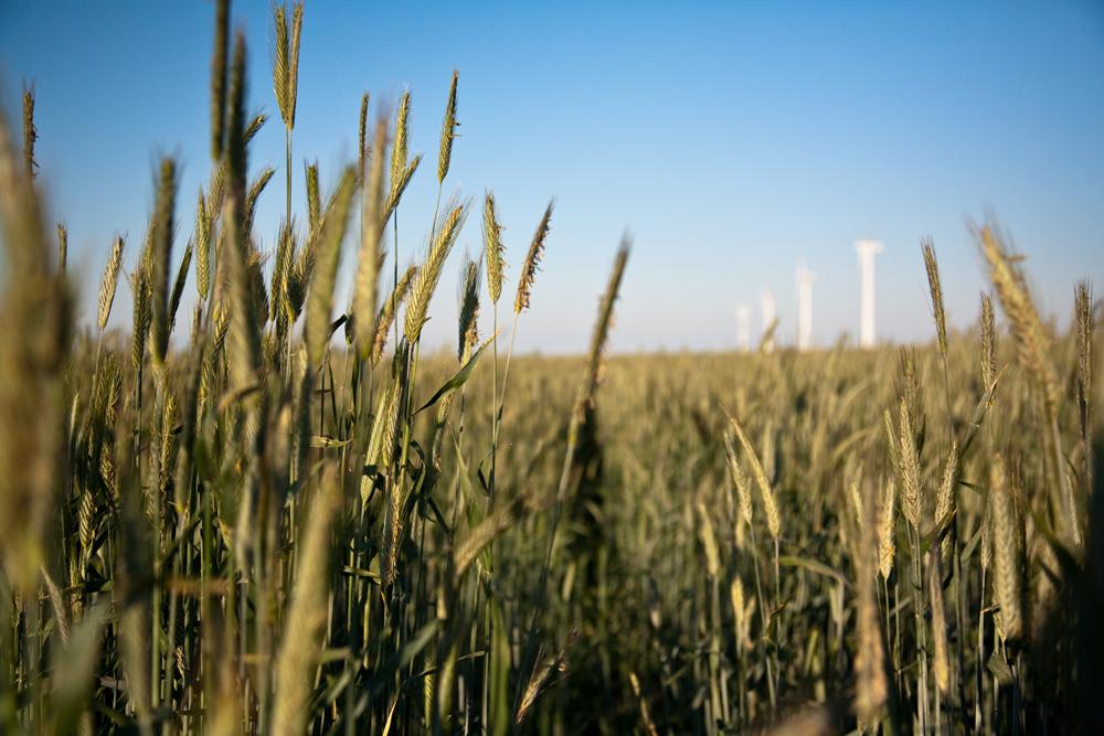 Energie aus Korn und Wind