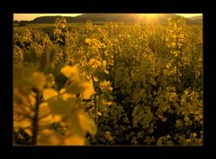 Energie-Feld.. - ...das Feuer der Sonne tanken... (7. DER REIHE: WAS MAN MIT RAPS...)