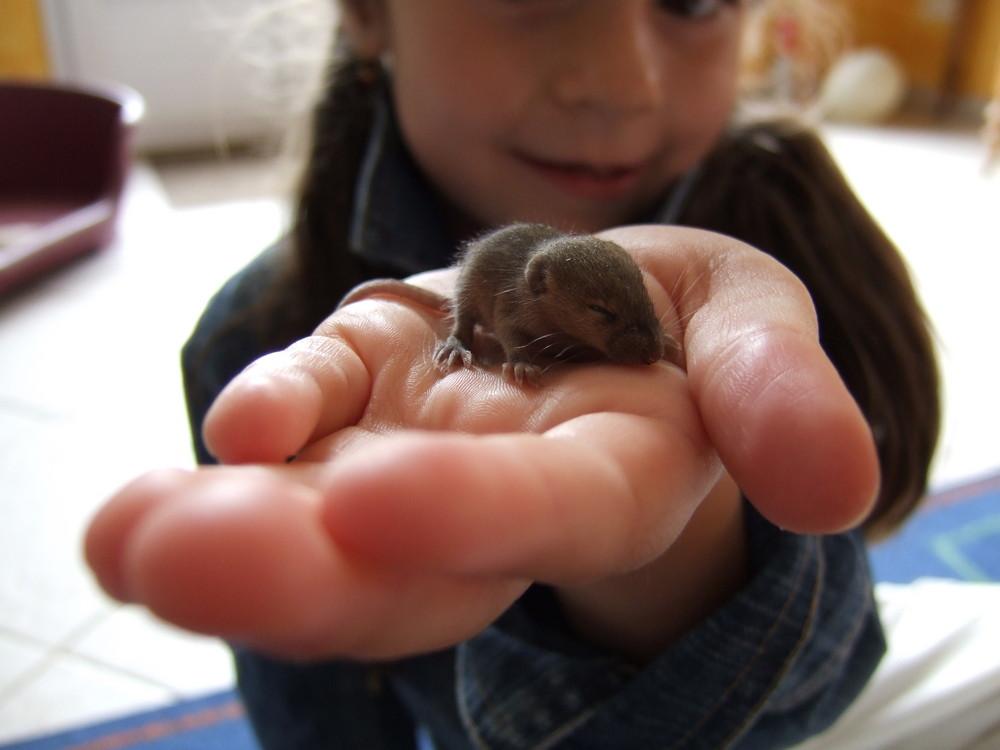 enfant à la souris